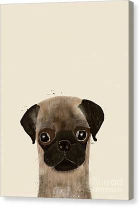 Canvas Print featuring the photograph Little Pug by Bri B