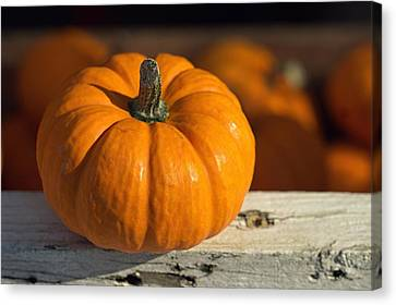 Little Pumpkin Canvas Print by Joseph Skompski