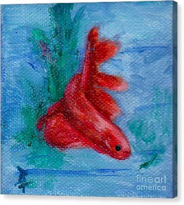Little Red Betta Fish Canvas Print by Brenda Thour