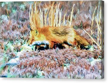 Little Red Fox In Habitat Canvas Print by Geraldine Scull