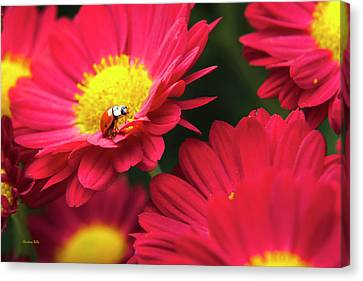 Little Red Ladybug Canvas Print by Christina Rollo