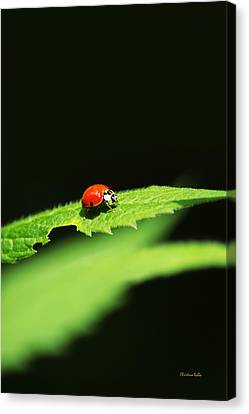 Little Red Ladybug On Green Leaf Canvas Print by Christina Rollo