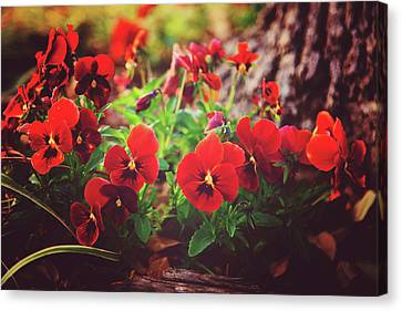 Little Red Pansies Canvas Print by Toni Hopper