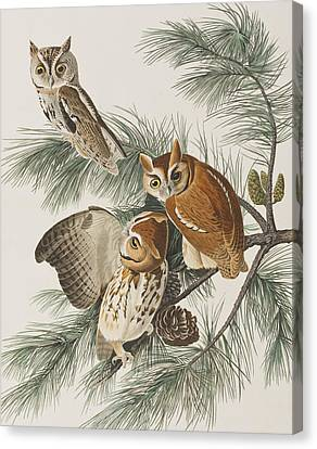 Little Screech Owl  Canvas Print by John James Audubon