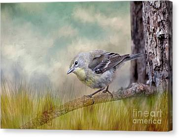 Little Warbler In Louisiana Winter Canvas Print by Bonnie Barry