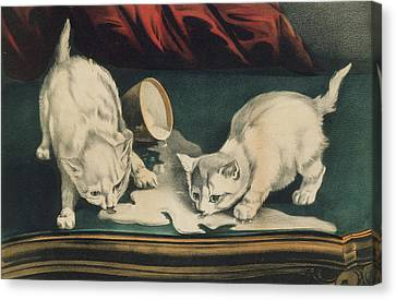 Canvas Print featuring the painting Little White Kitties Into Mischief                                                      by Matthias Hauser