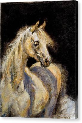Little White Mare Canvas Print