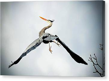 Canvas Print featuring the photograph Live Free And Fly by Rodney Campbell