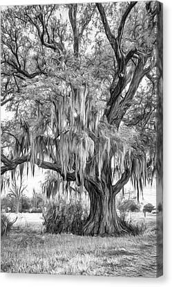 Evergreen Plantation Canvas Print - Live Oak And Spanish Moss - Paint Bw by Steve Harrington