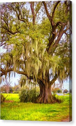 Evergreen Plantation Canvas Print - Live Oak And Spanish Moss - Paint by Steve Harrington