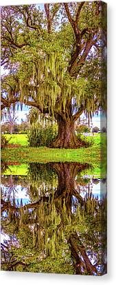 Evergreen Plantation Canvas Print - Live Oak And Spanish Moss - Reflection by Steve Harrington