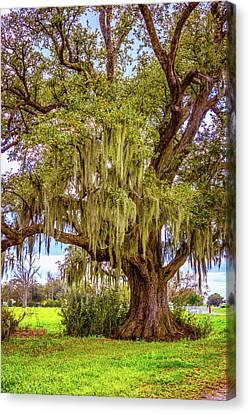 Evergreen Plantation Canvas Print - Live Oak And Spanish Moss by Steve Harrington