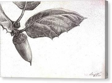 Live Oak Canvas Print