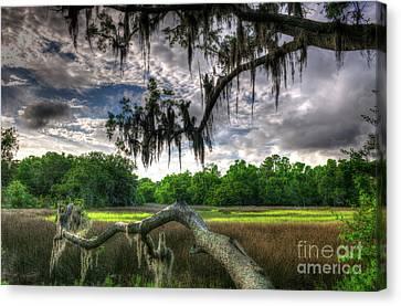 Live Oak Marsh View Canvas Print
