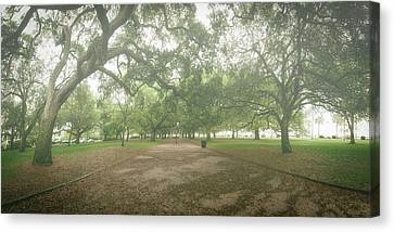 Live Oak Promenade Canvas Print