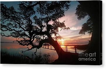 Canvas Print featuring the photograph Live Oak Sunrise by Benanne Stiens
