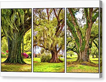 Live Oak Triptych Canvas Print by Steve Harrington