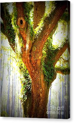 Live Oak With Cypress Beyond Canvas Print by Carol Groenen