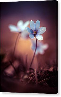 Liverworts Canvas Print