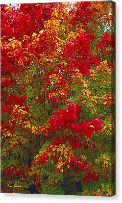 Framing Canvas Print - Living Color by Bruce Thompson