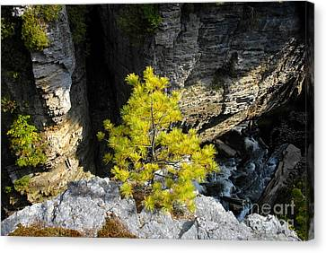 Living On The Edge Canvas Print by David Lee Thompson