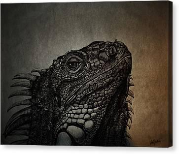 Lizard Canvas Print by Ana Djurkovic