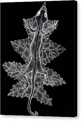 Lizard And Leaf Canvas Print by Nick Gustafson