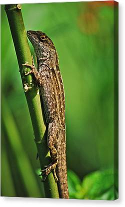 Lizard Canvas Print by Michael Peychich