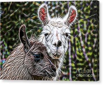 Llamas Canvas Print by Marvin Blaine