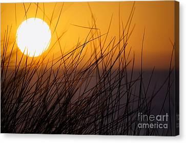 Llangennith Sun Canvas Print
