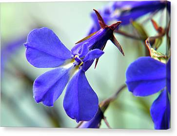 Canvas Print featuring the photograph Lobelia Erinus by Terence Davis