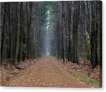 Canvas Print featuring the photograph Loblolly Lane by Robert Geary