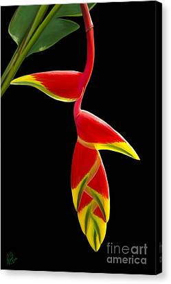 Lobster Claw Canvas Print by Rand Herron