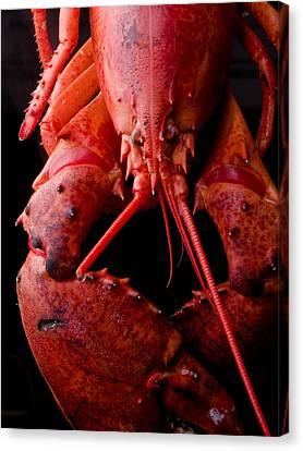 Lobster Canvas Print by Jim DeLillo