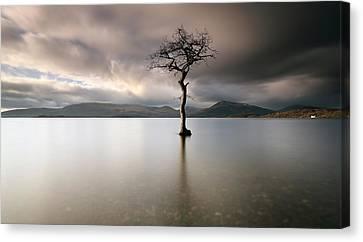 Loch Lomond Lone Tree Canvas Print