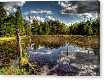 Lochan Close To Loch Garten Canvas Print by Gabor Pozsgai