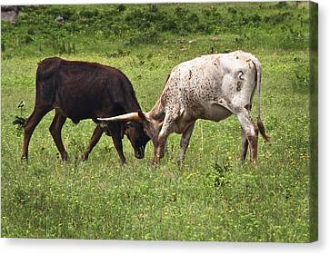 Canvas Print featuring the photograph Locking Horns by Tamyra Ayles