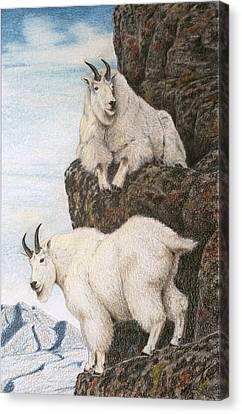 Lofty Perch Canvas Print