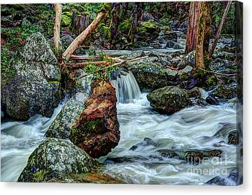 Canvas Print - Log In Bridalveil Creek In Yosemite by Terry Garvin