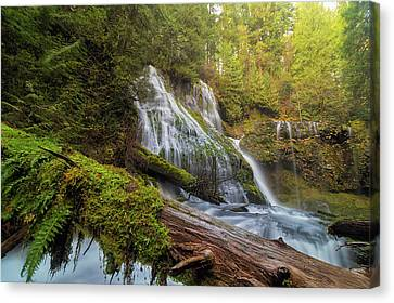 Canvas Print - Log Jam By Panther Creek Falls by David Gn
