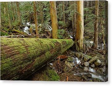 Log Over A Stream Canvas Print by Jeff Swan