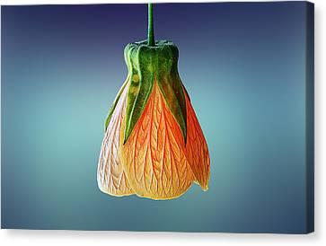 Loks Like  A Lamp Canvas Print by Bess Hamiti