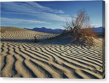 Lone Bush Death Valley Hdr Canvas Print by James Hammond