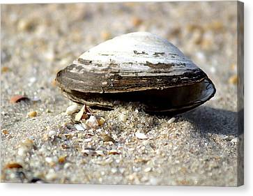 Lone Clam Canvas Print by Mary Haber