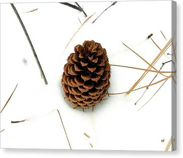 Pine Needles Canvas Print - Lone Cone by Will Borden