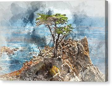 Lone Cypress In Monterey California Canvas Print