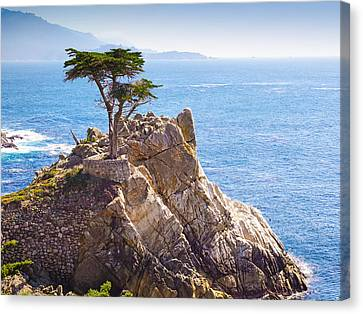 Lone Cypress Canvas Print by Lutz Baar