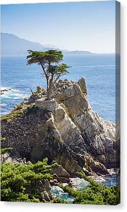 Lone Cypress Pebble Beach Canvas Print by Lutz Baar