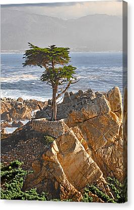 Pacific Coast States Canvas Print - Lone Cypress - The Icon Of Pebble Beach California by Christine Till