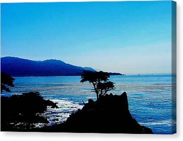 Lone Cypress Tree - Pebble Beach Ca Canvas Print